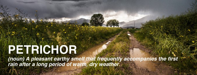 image of word petrichor